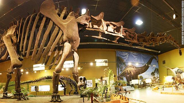 bao-tang-dinosaur